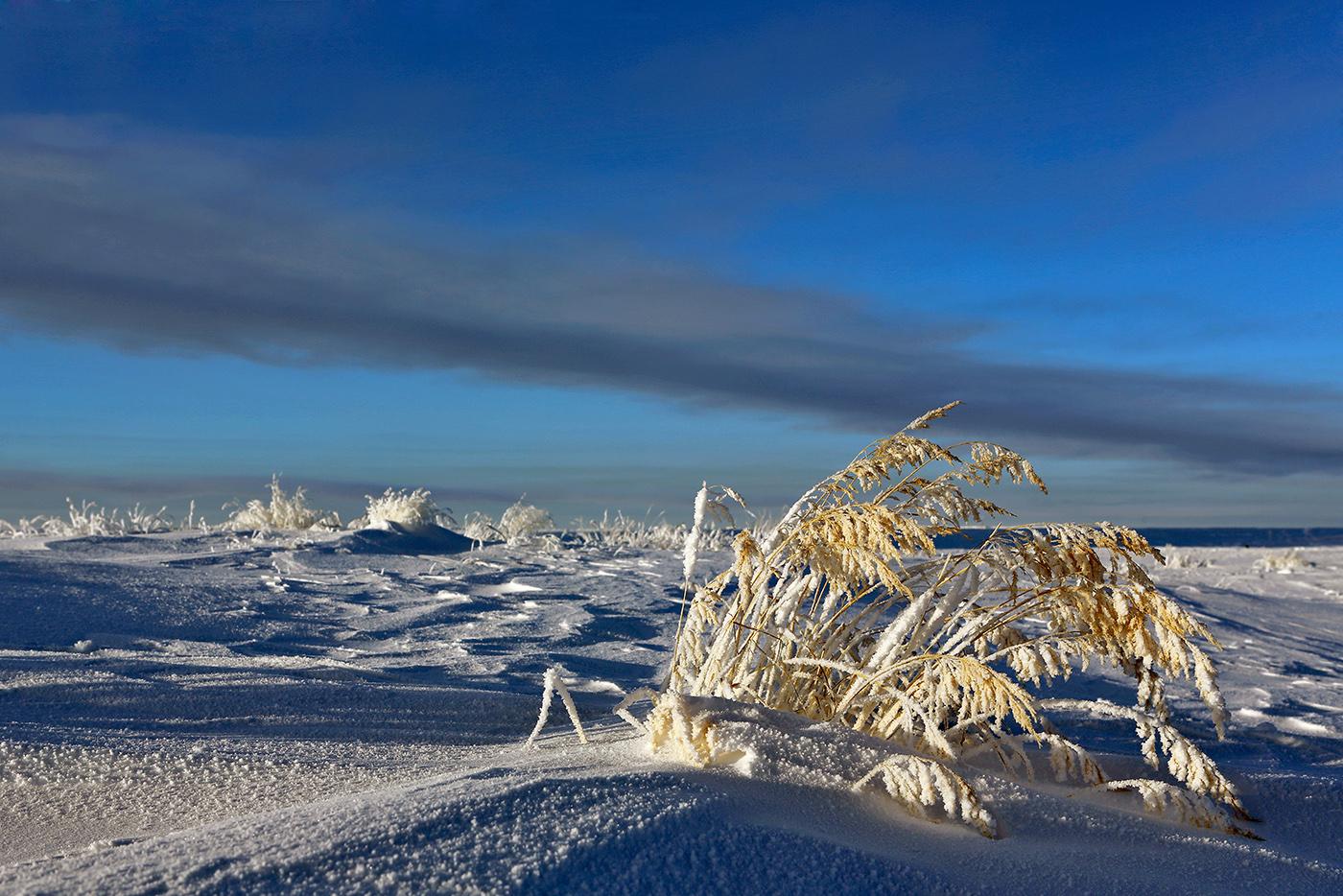 Димитровград картинки зимой смешные