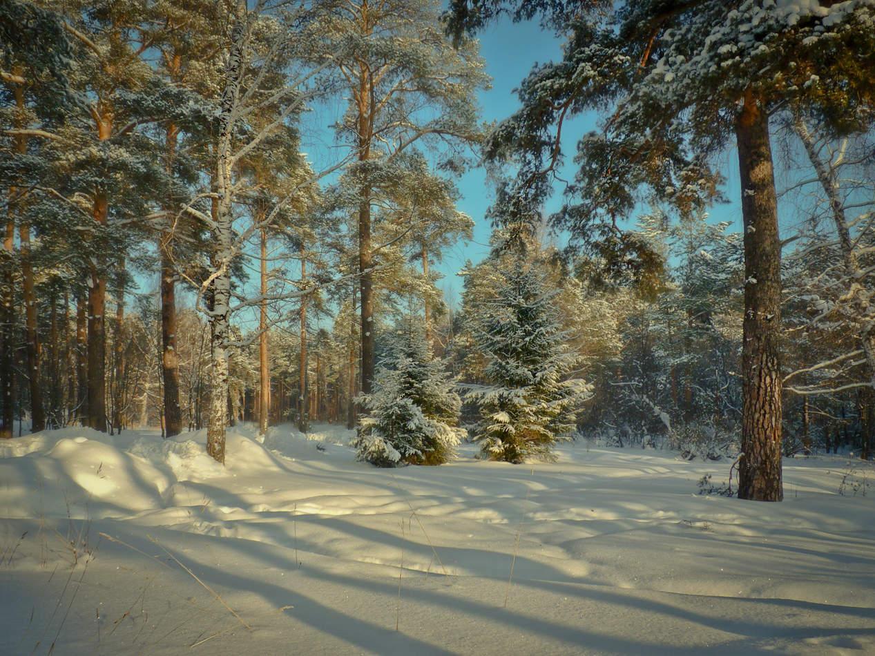 поляна в лесу зимой картинки отличается признаков