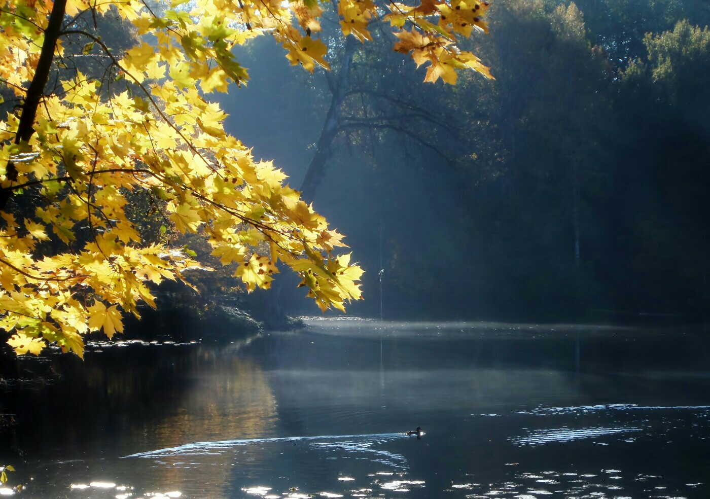 Осеннее утро фото картинки