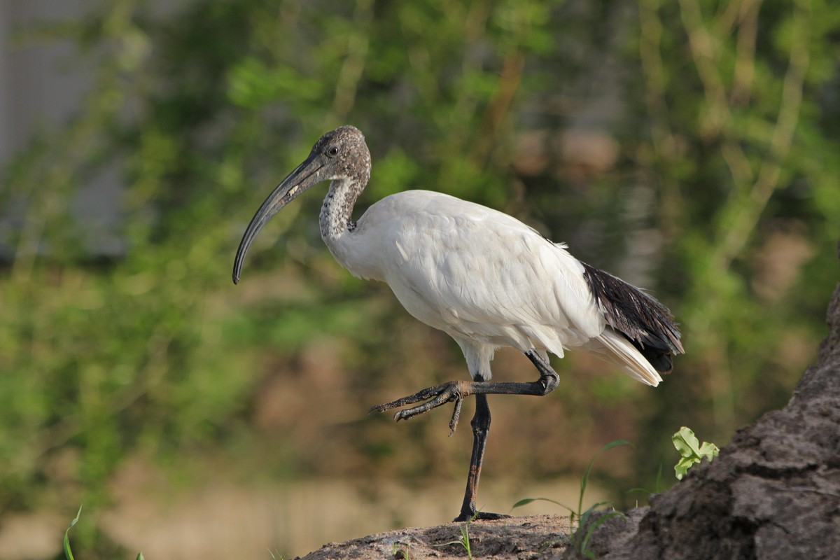 спорную фото птицы хадада анонсах новых камер