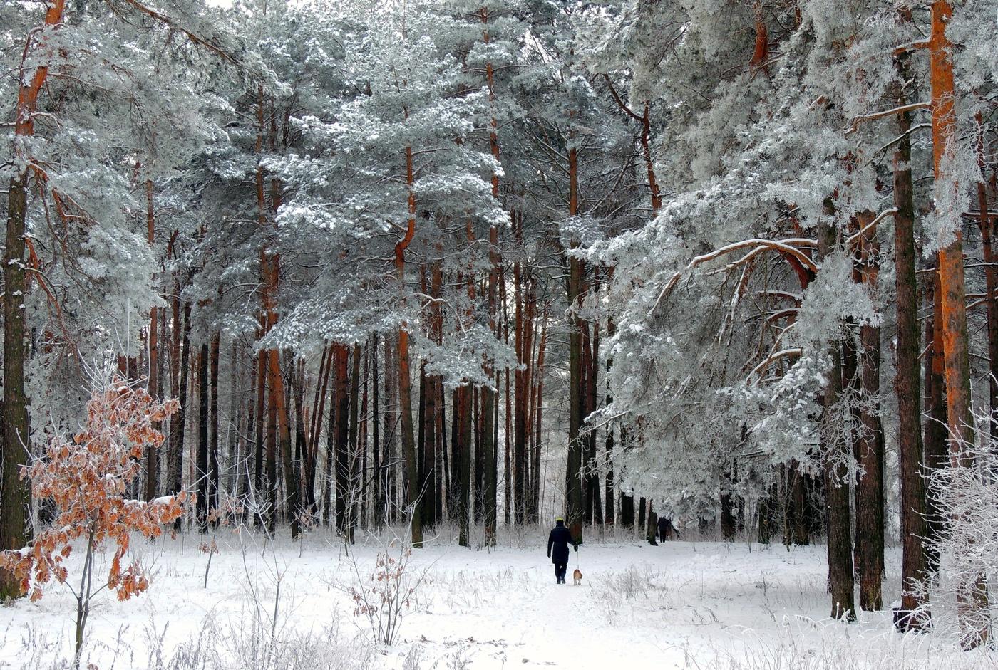 обои путешествие в зимний лес с фотоотчетом сада райский уголок