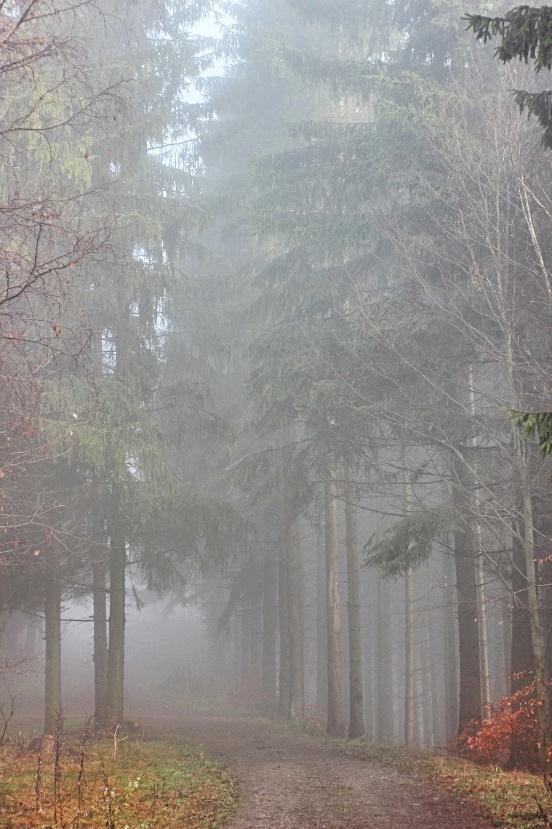 самым как правильно фотографировать в туман приди, забери