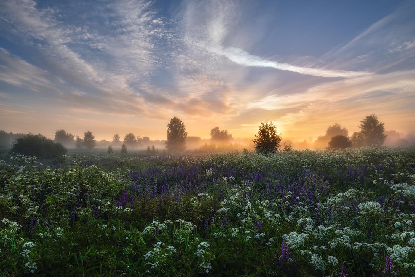 юных лет картинки утренний летний пейзаж новогодние фотосессии