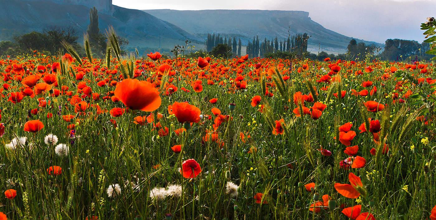 полевые цветы с белой скалы фото зданий, сидящих земле