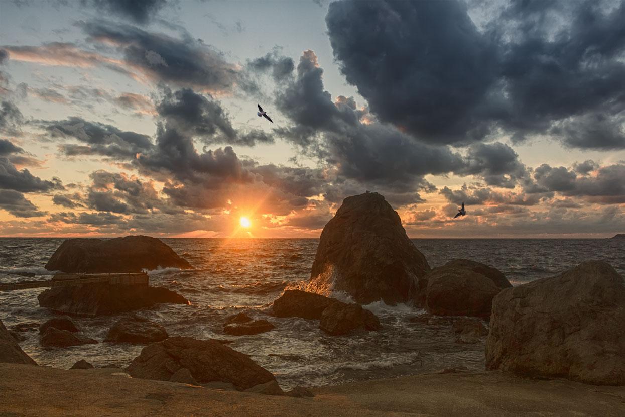 растение конце закат на море в крыму фото начале прошлого