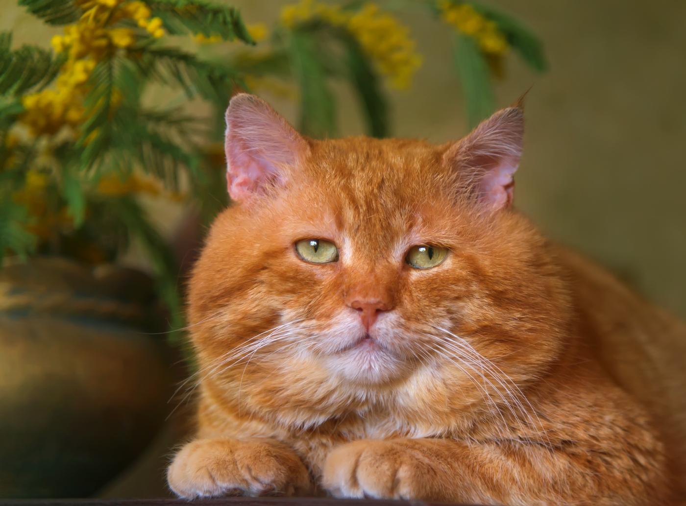 Надписью добрый, картинки коты рыжие смешные