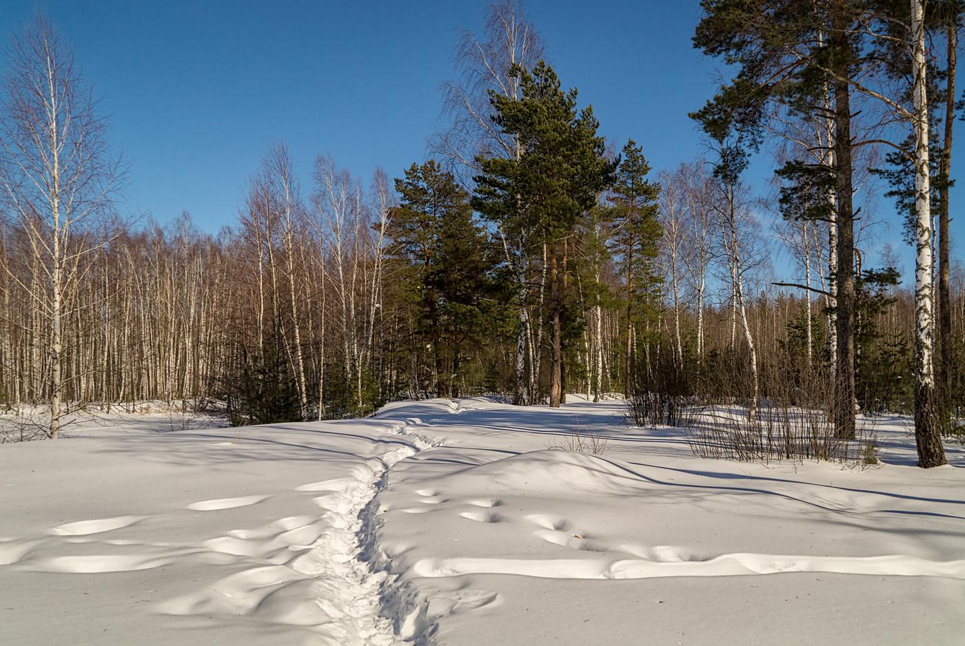 Картинки на тему конец зимы, новым