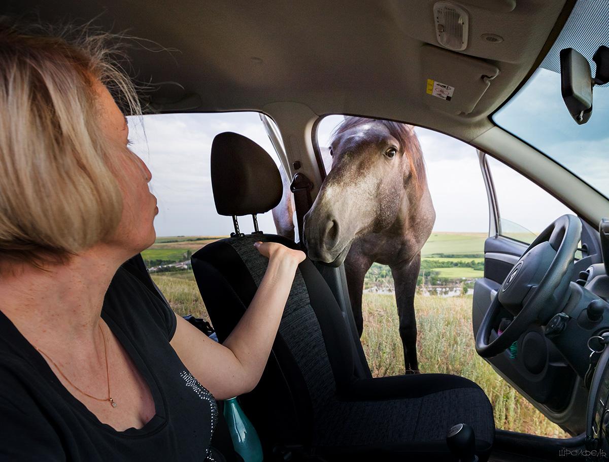 Лошадь в машине картинки