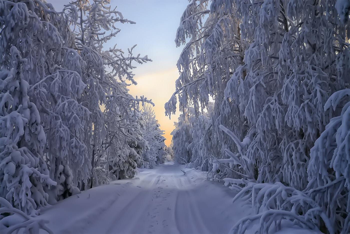 подойдет картинки зимний снежный коми лес проигрывать экране