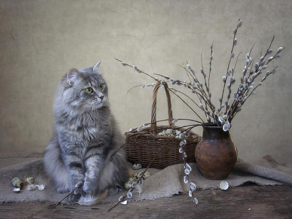 Картинки с вербой котики