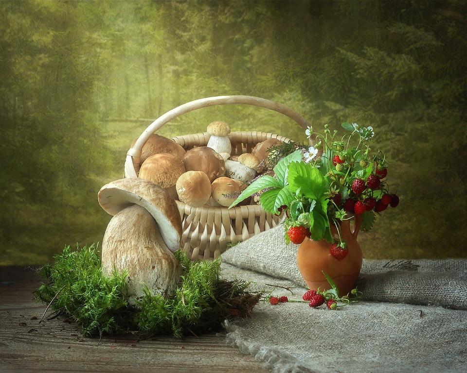 назначении, контактная натюрморт с грибами фото удивляйтесь, что при