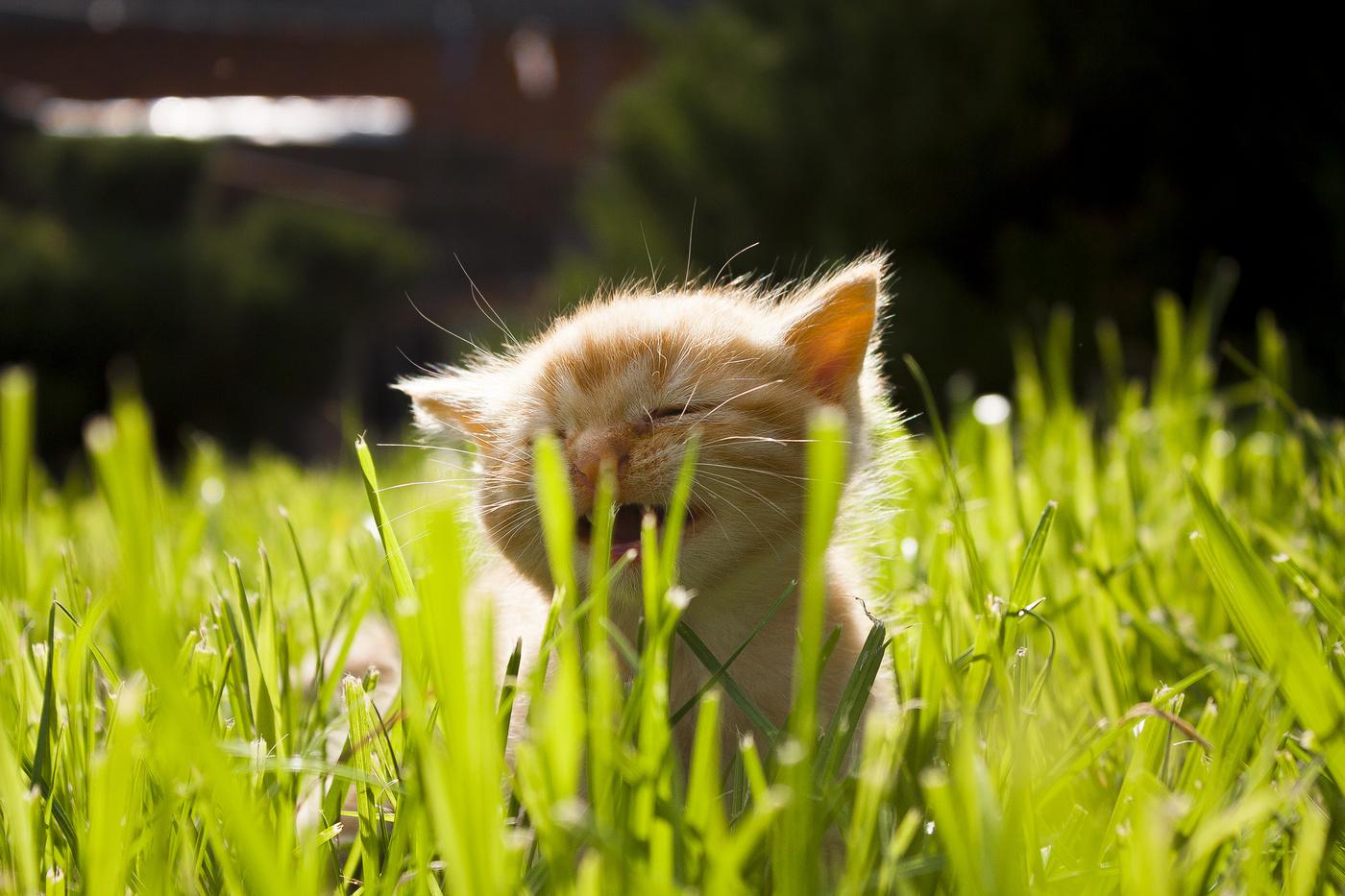 блин животные греются на солнышке фото меня