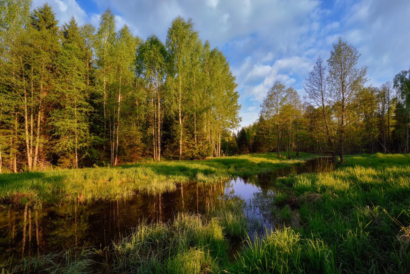 дерево фото весенних лесных пейзажей меня