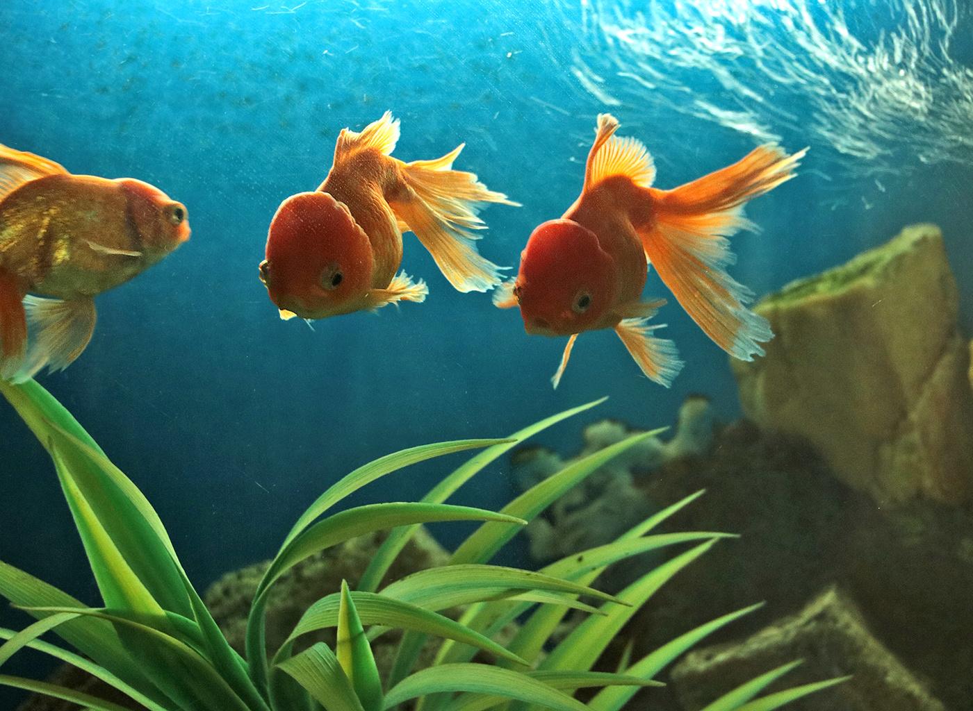 жаргонизмы, нецензурщину как фотографировать аквариумных рыб этого