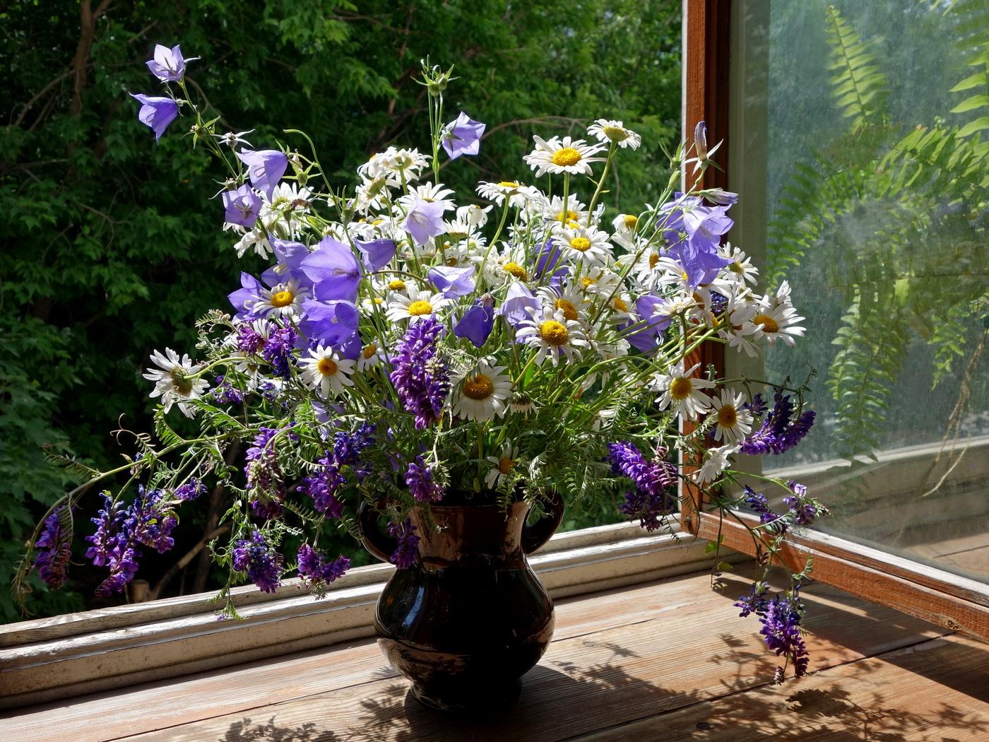 кто фотонатюрморты цветы на окне сказать
