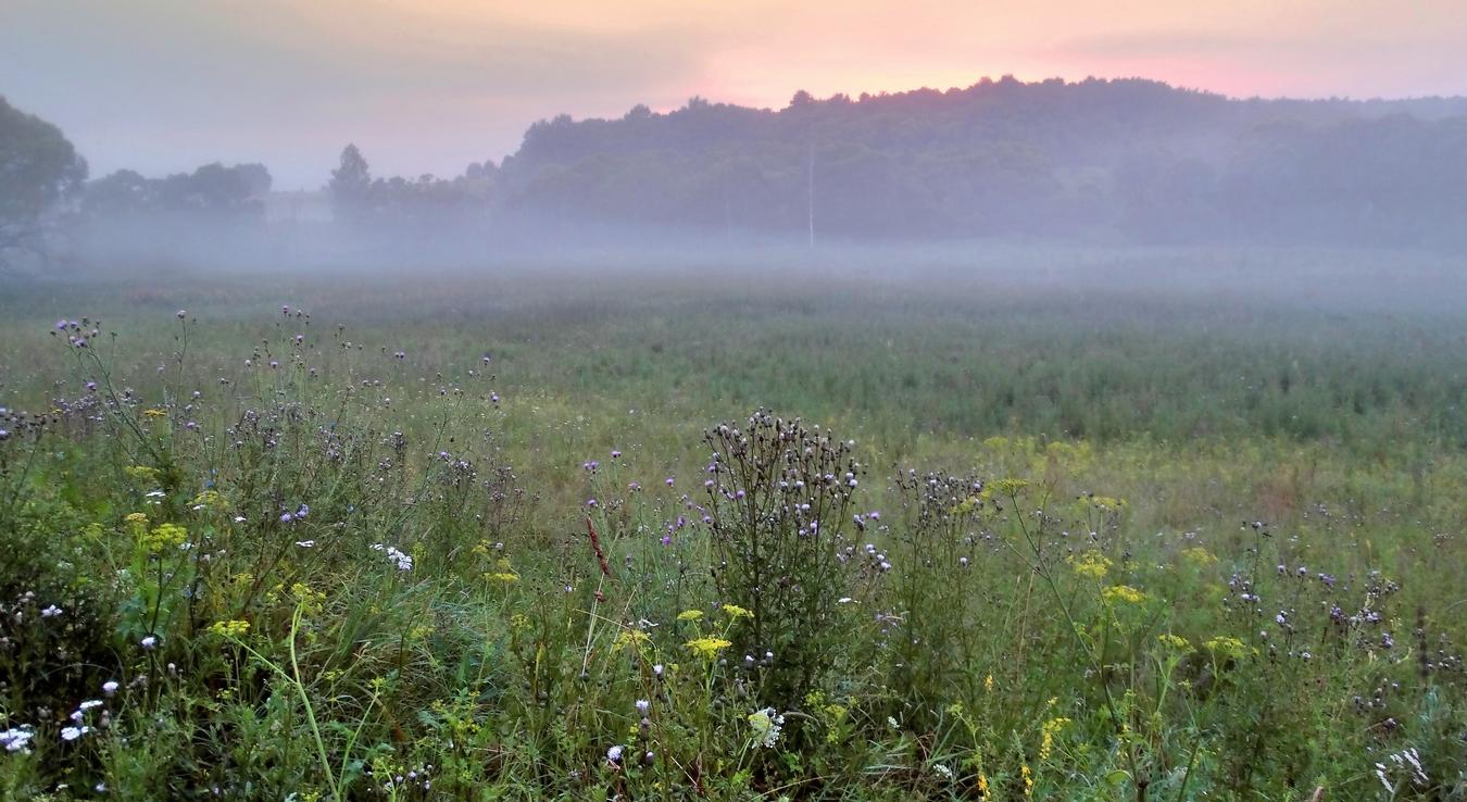 картинки туманы августа выгоняли стадо