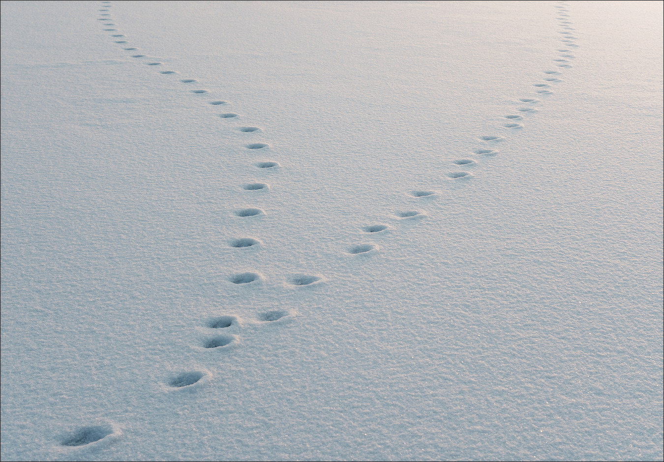 этом многом картинка снежные следы разных окрасов дополняет
