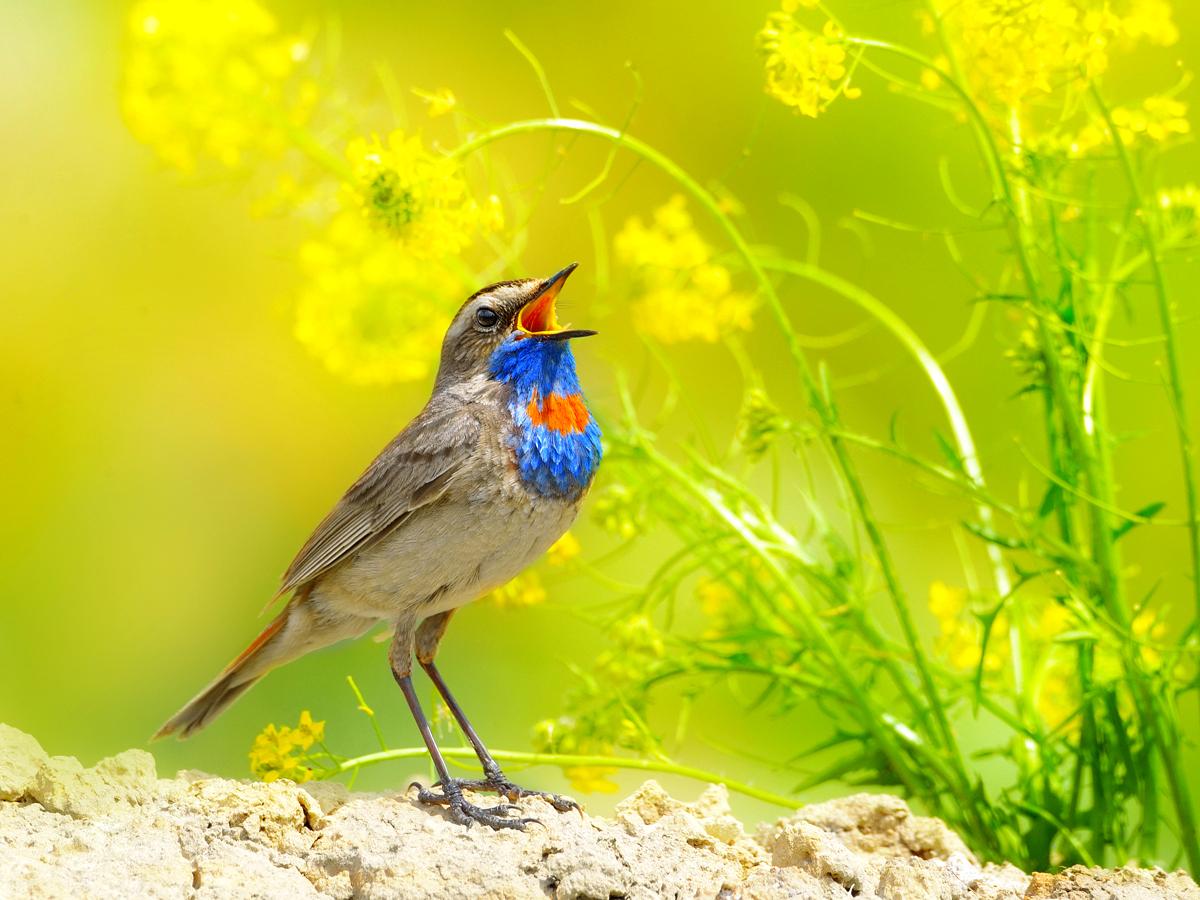 картинка птичьи трели каталоге представлены