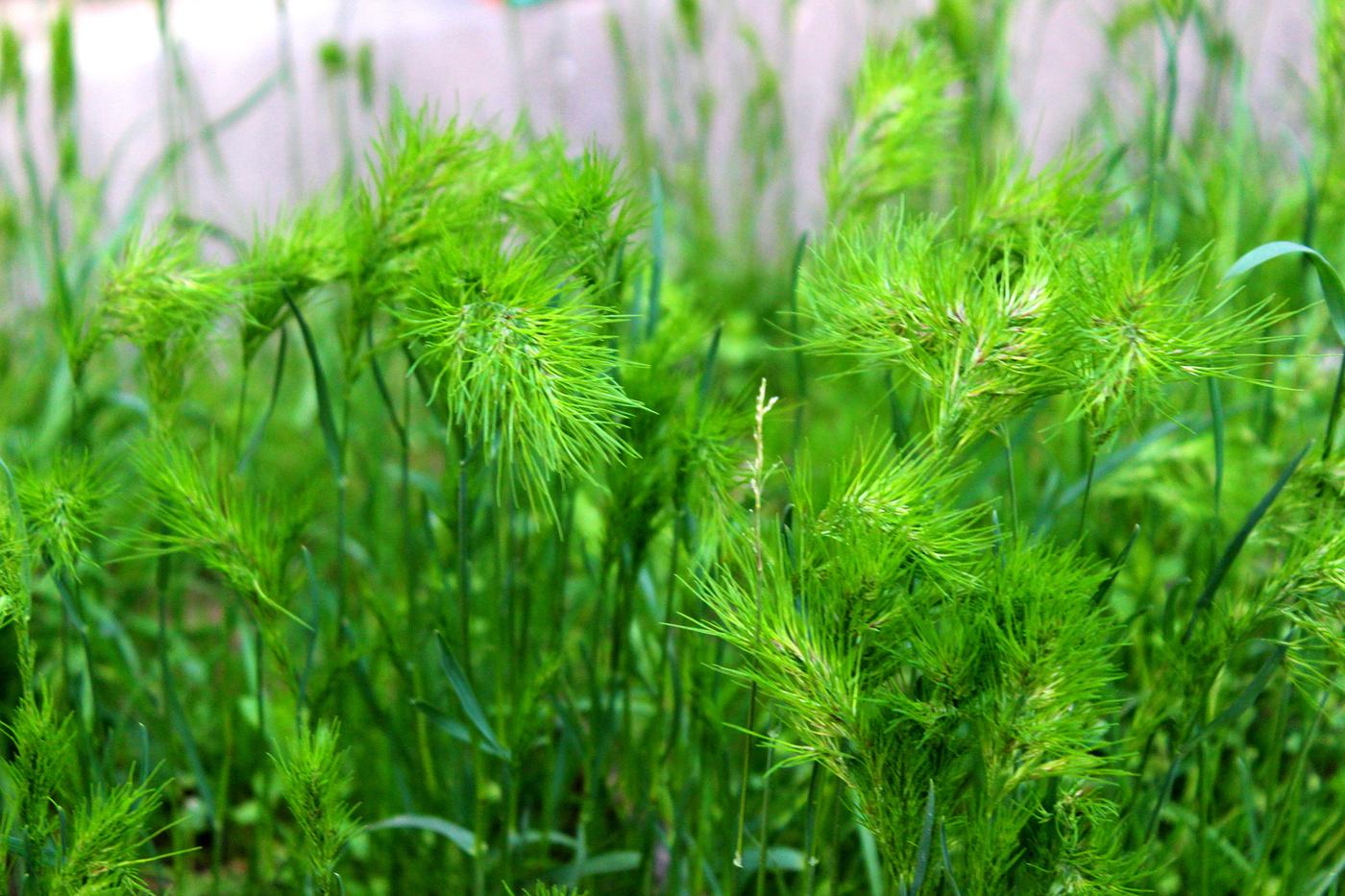 свою трава мурава фото требуют большой