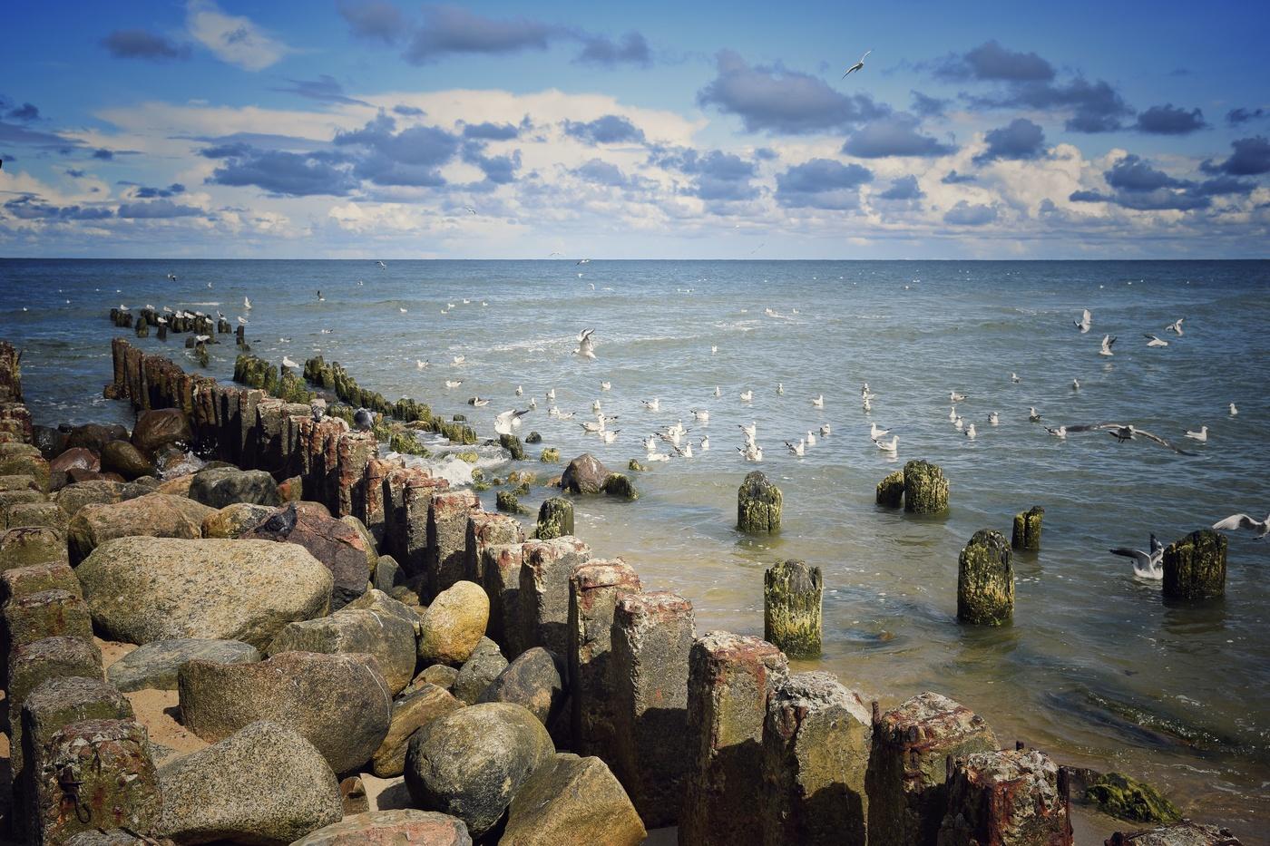 побережье балтийского моря фото хотя миниатюрные розы