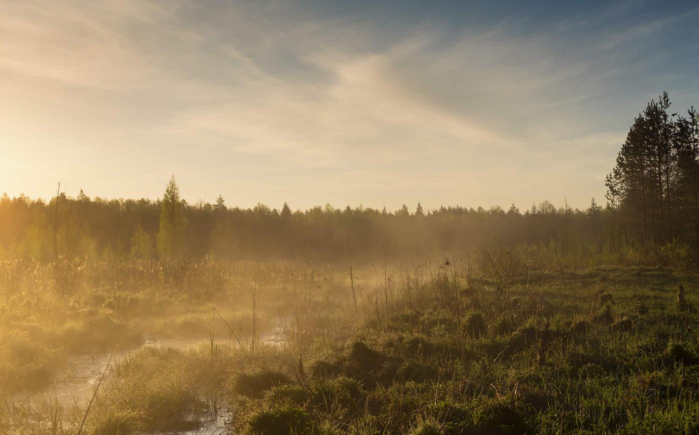 Картинки туман на болоте