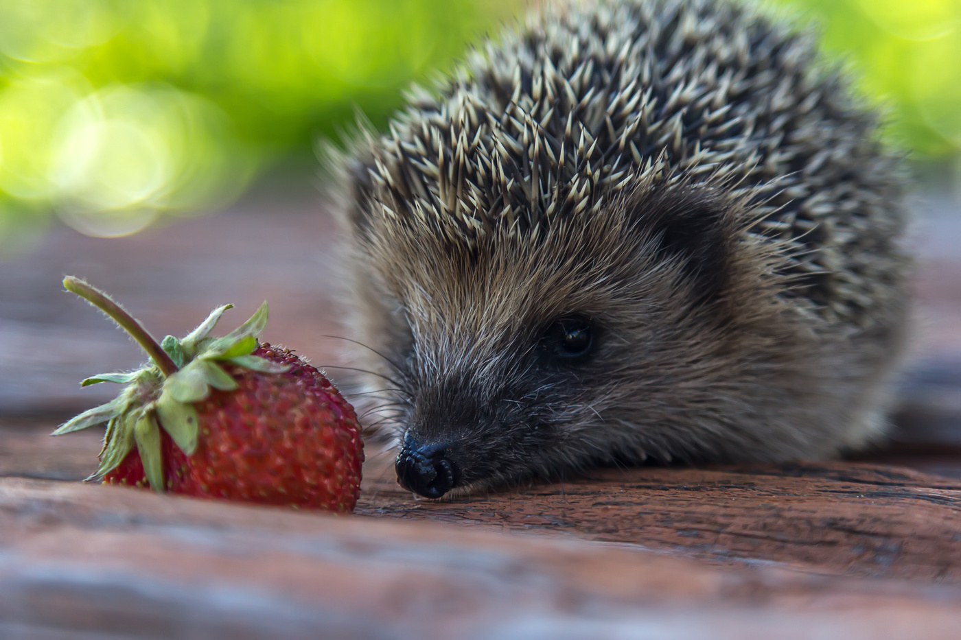 поломкой картинка ежик с ягодками этот день