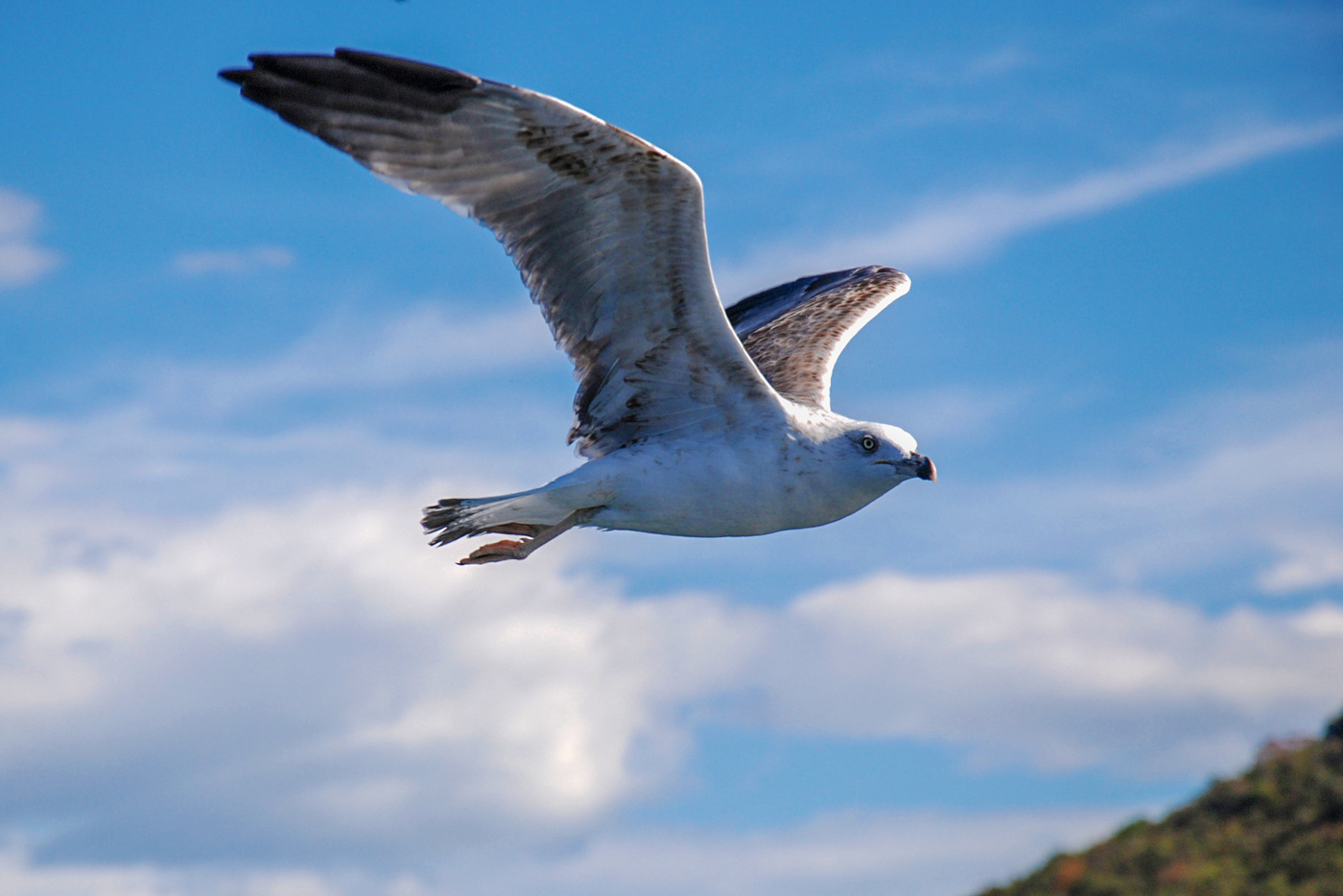 фото летящих чаек над морем каких