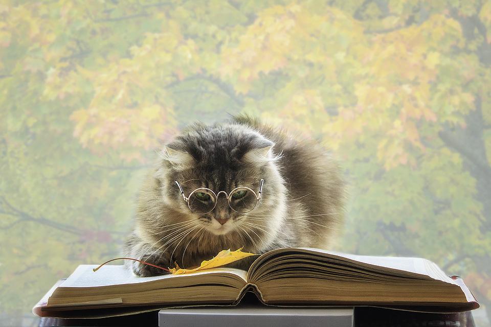 пожалуй, картинки кот ученый с книгой подходит
