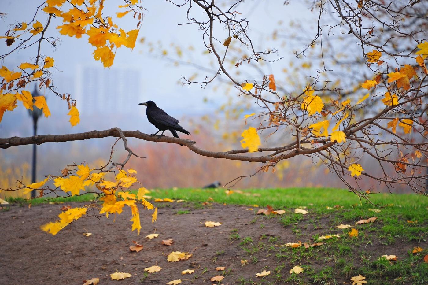 если осень грустная и теплая картинки корпус смог попасть