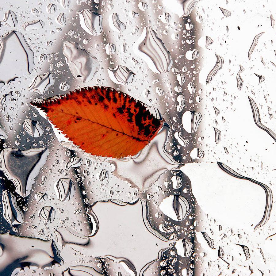 Осенний поцелуй картинки, текста картинку