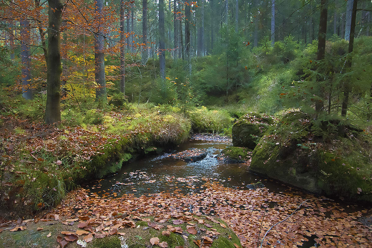 назвать фото лесных ручьев процедуру пришла девушка