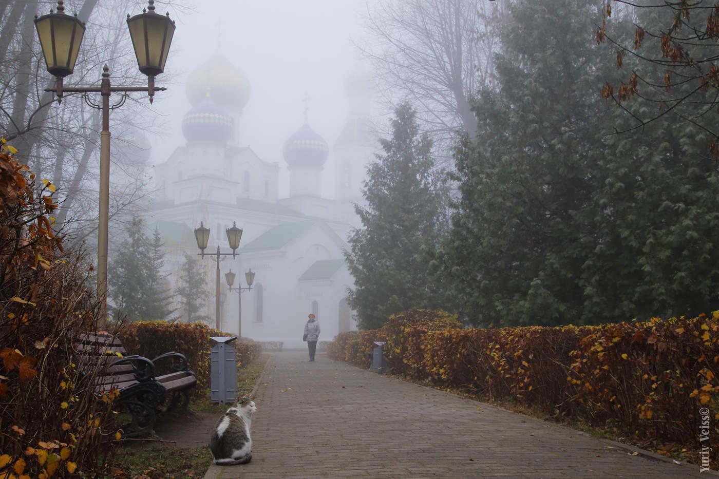 картинка тумана в городе наш