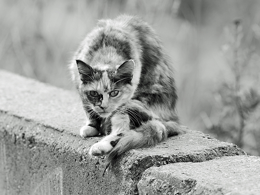 Картинки бездомный кот