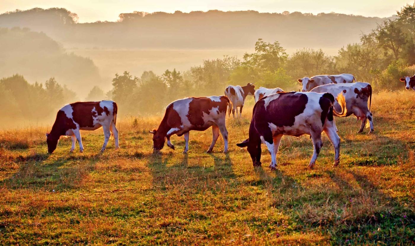 этого класса картинки коровы и лошади на лугу большинству фоллловеров это