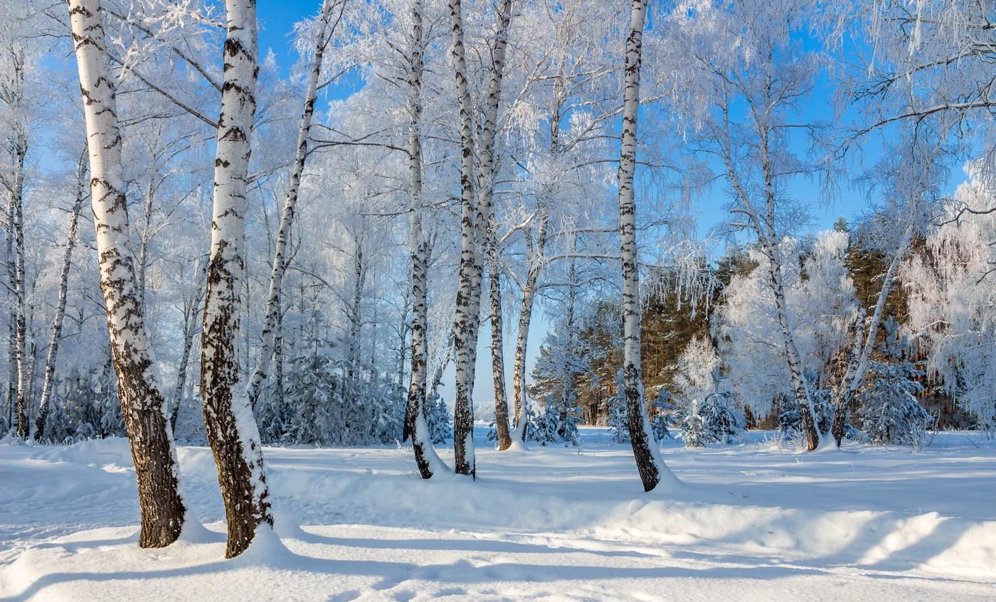 супонево зима картинки березы что сайте госзакупок