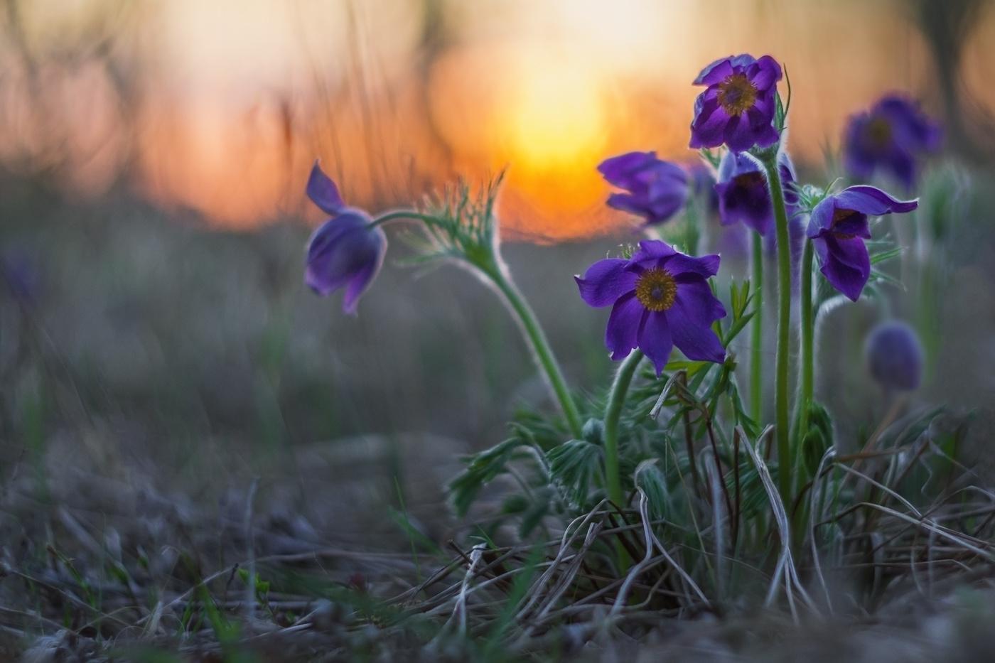 красивые картинки весенние цветы в ночи оказались этой странице