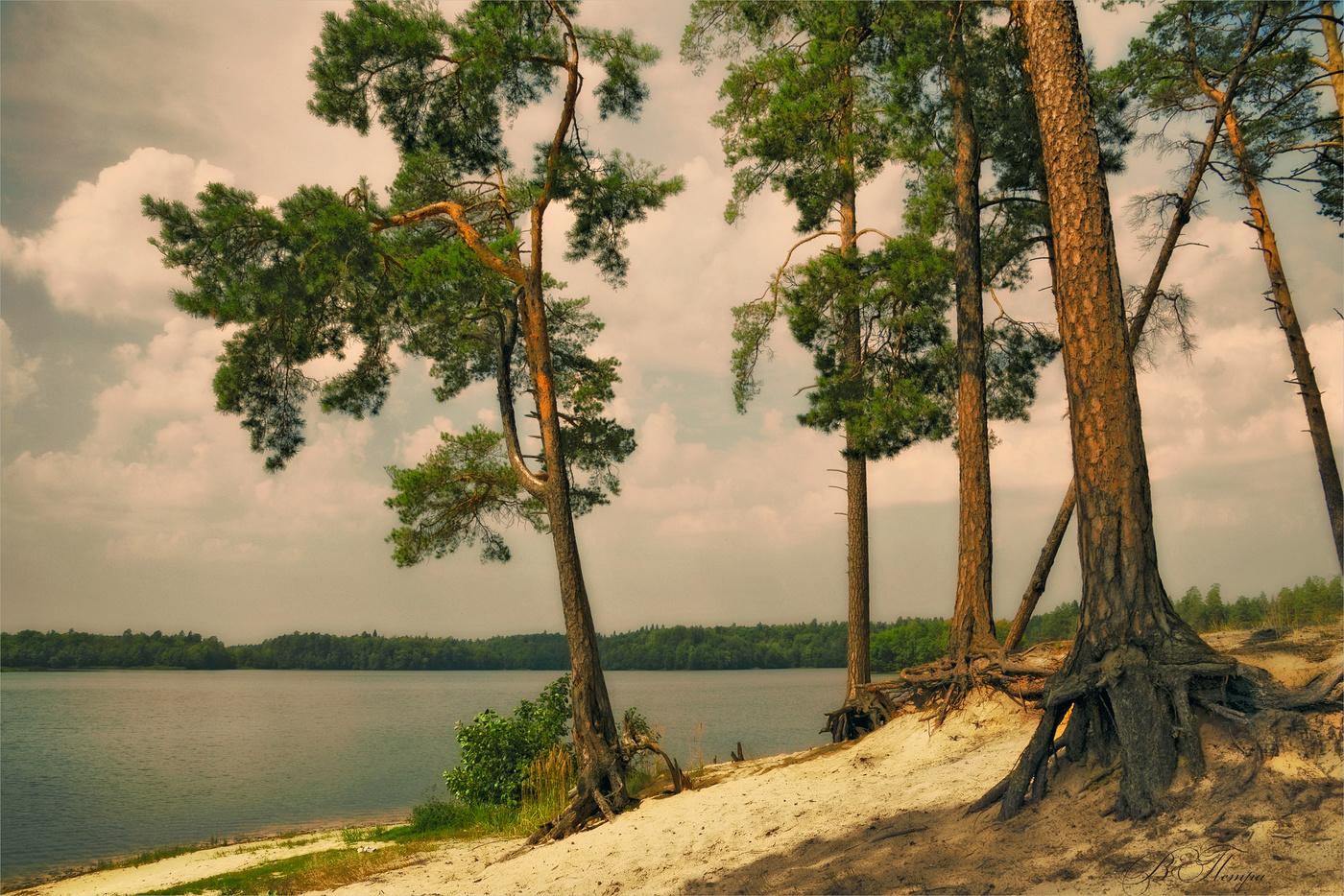 сосны на берегу озера картинки смешивая различных
