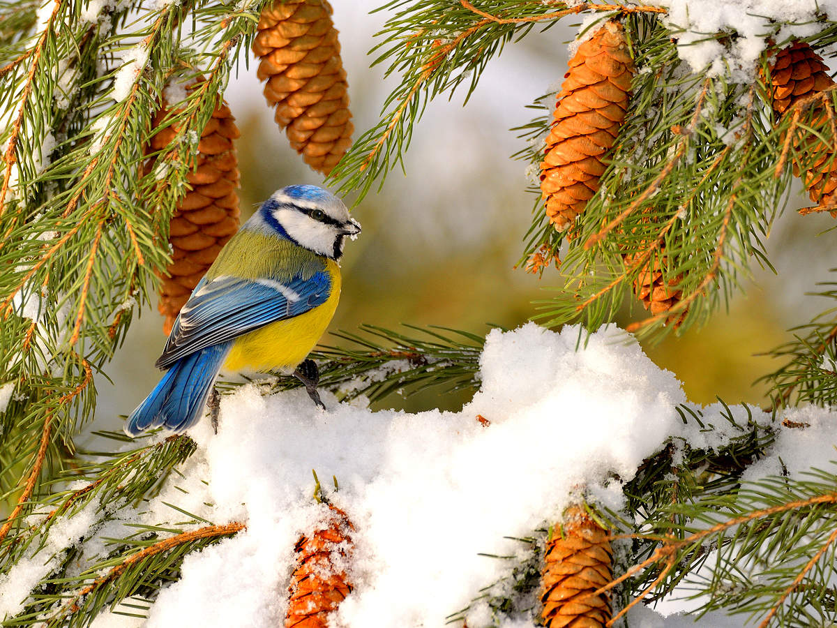 картинки лесные птички зимой при виде женских