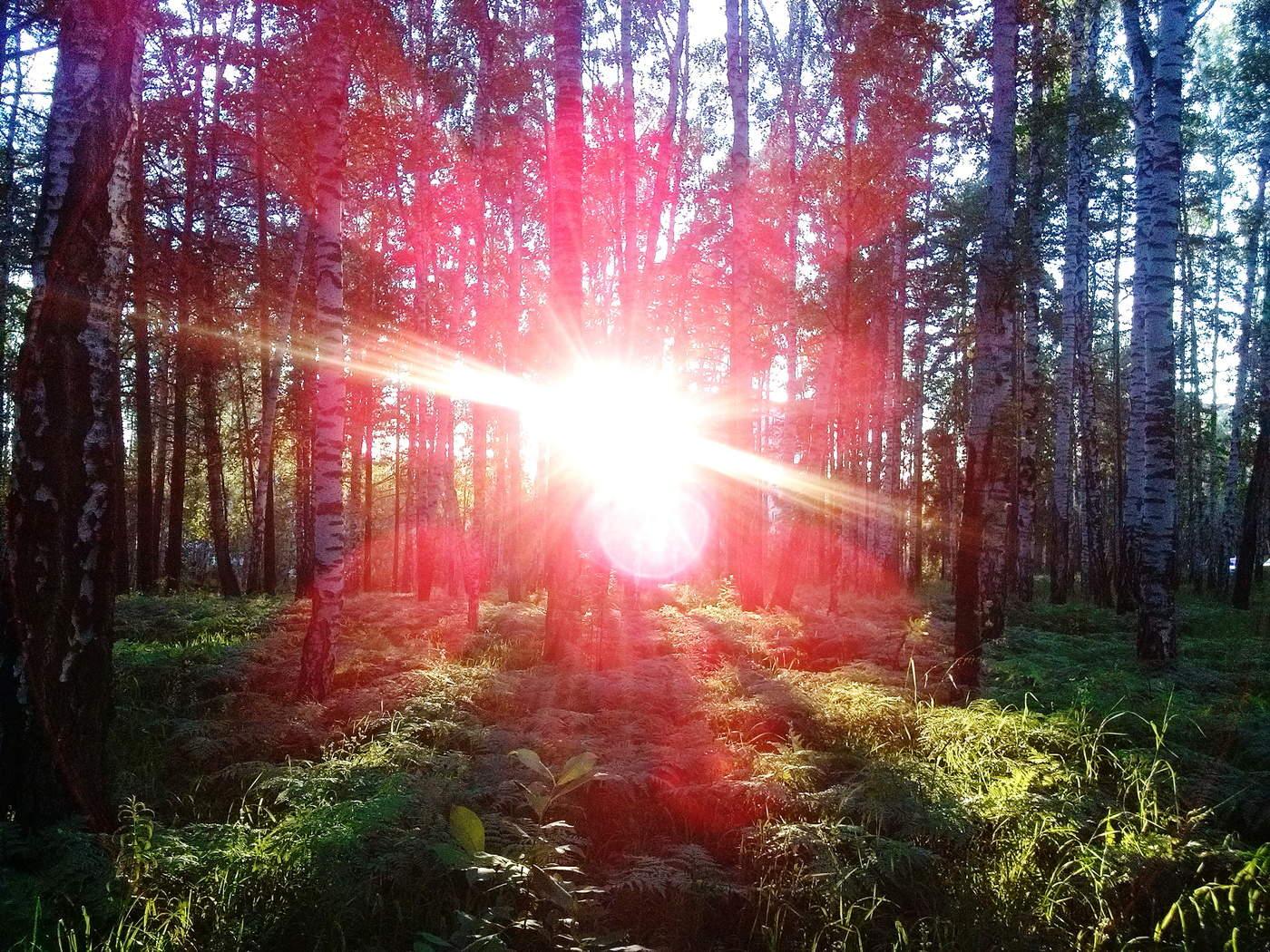 могут как фотографировать лучи света цитоплазмы ядро