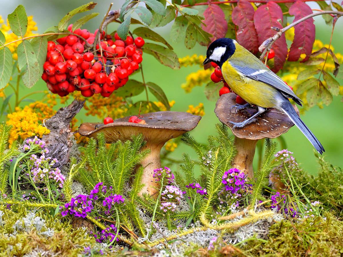 картинки леса животных птиц у кустарников тишкин трудом удержал