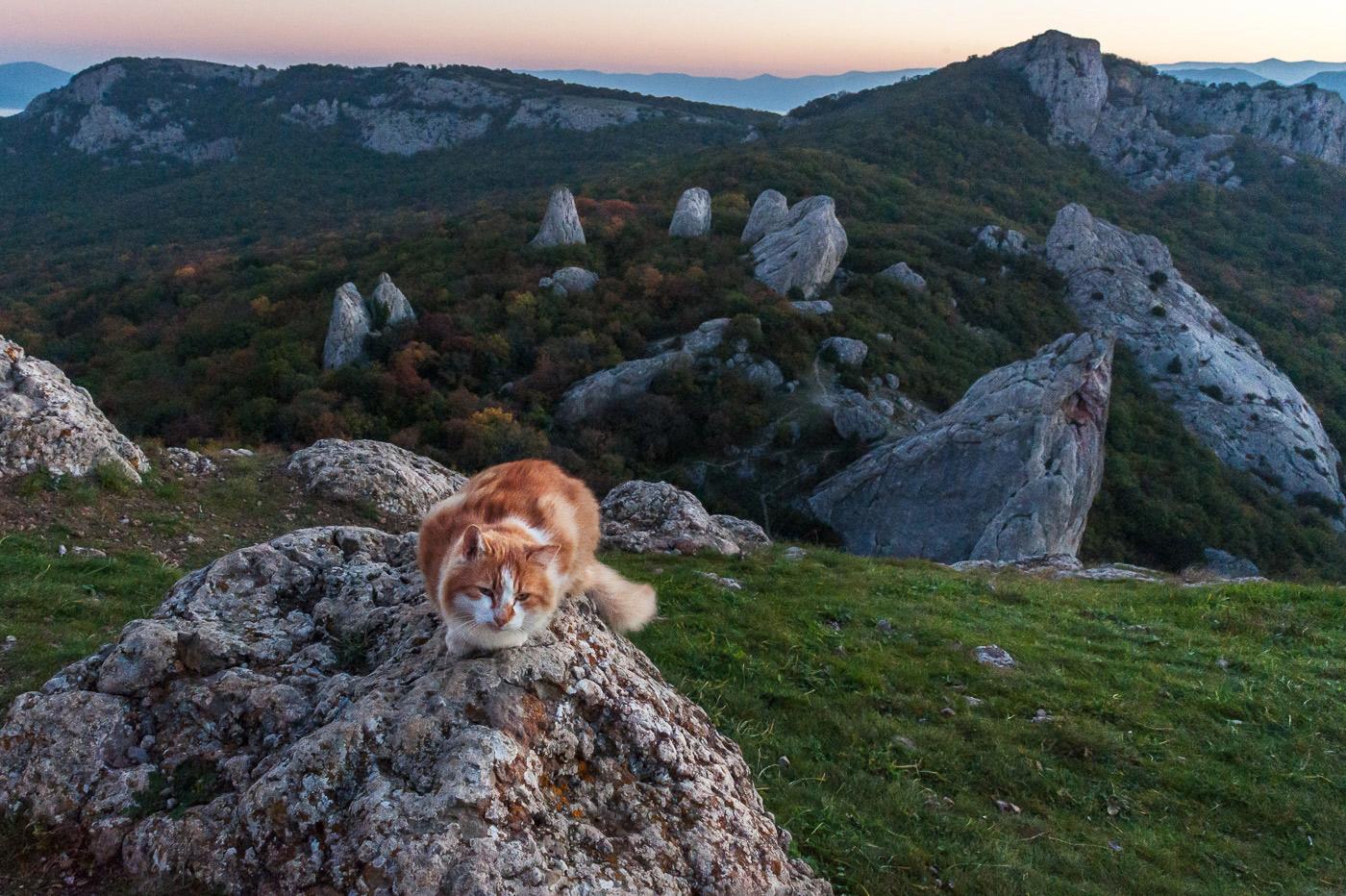 купить картинки с котами в горах например, это было