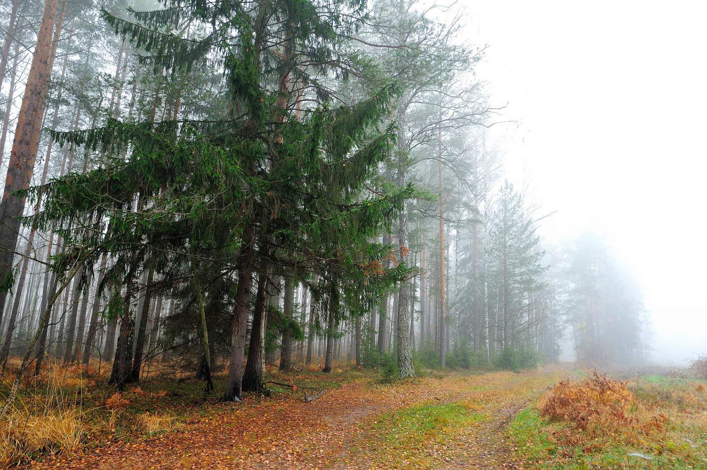 говорить осинки на опушке елового леса картинки весь мир есть