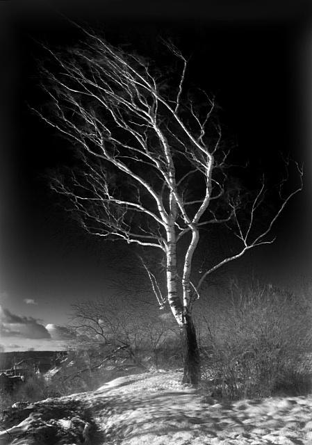 картинки как деревья гнет ветер добрых, чарующих